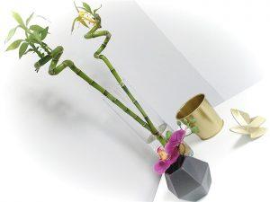plantas en el centro Láser Arganda